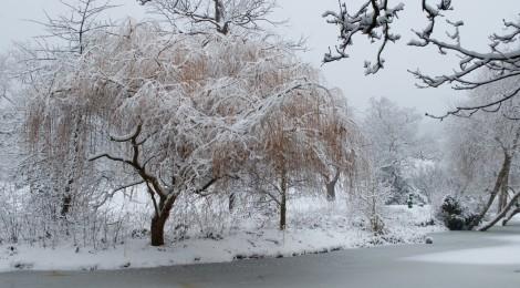 Snowy Lake - Harrow