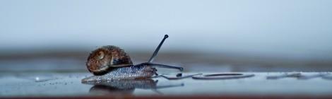 A Snail on My Dustbin